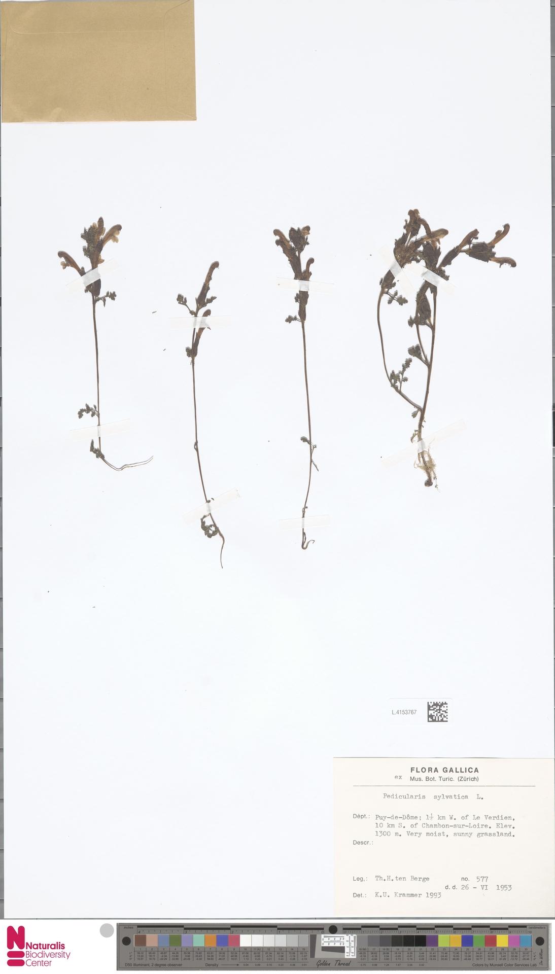 L.4153767 | Pedicularis sylvatica L.