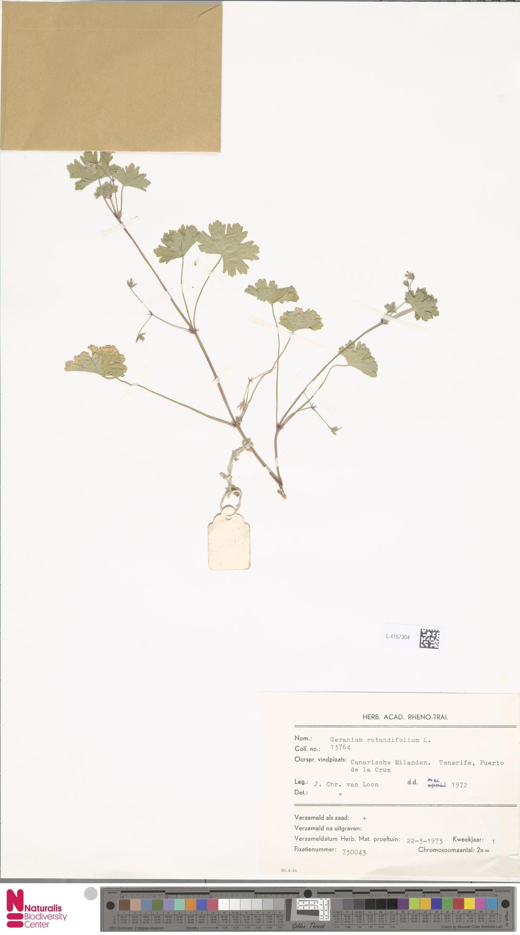 L.4157304 | Geranium rotundifolium L.