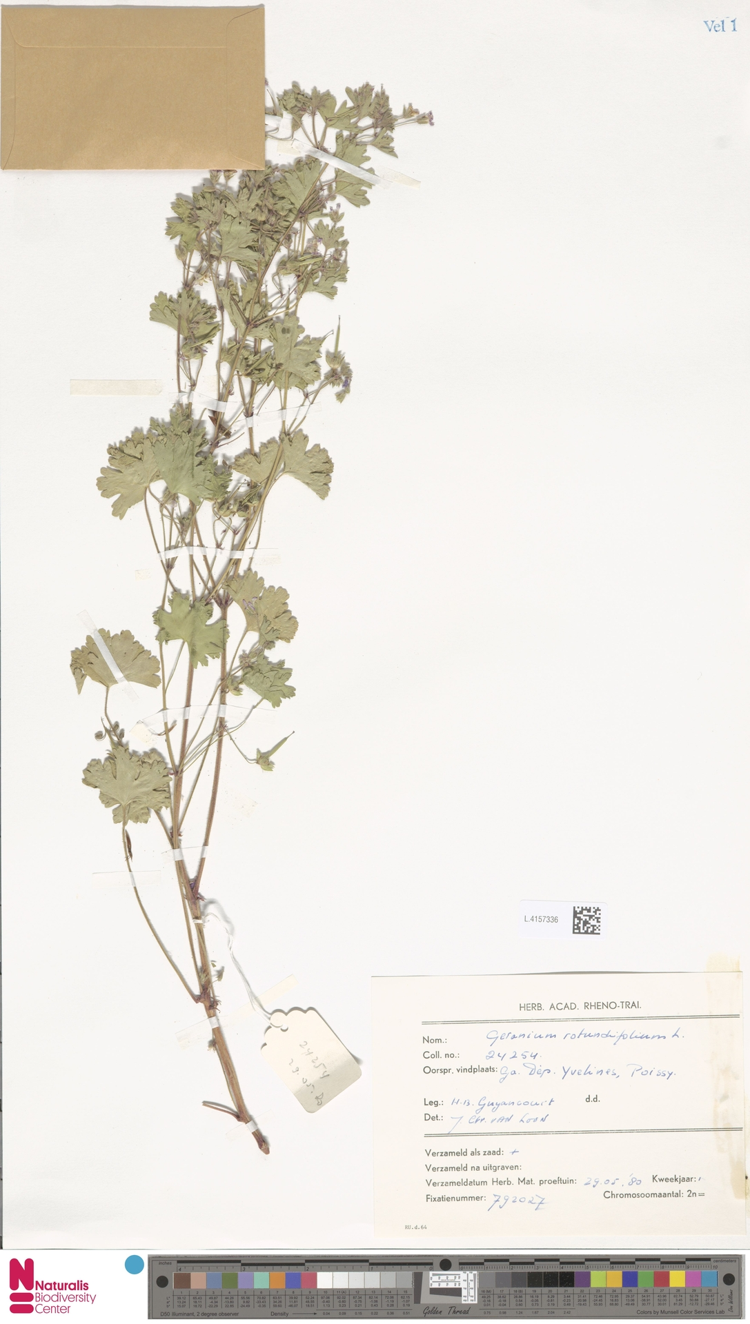 L.4157336 | Geranium rotundifolium L.