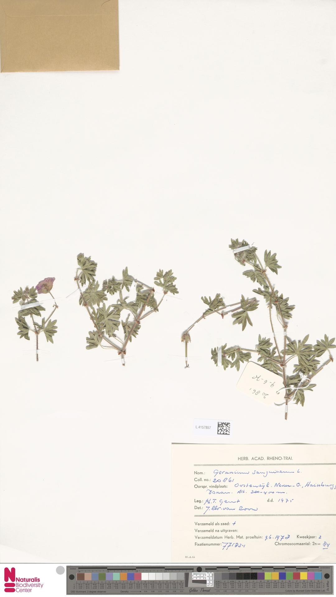 L.4157857 | Geranium sanguineum L.