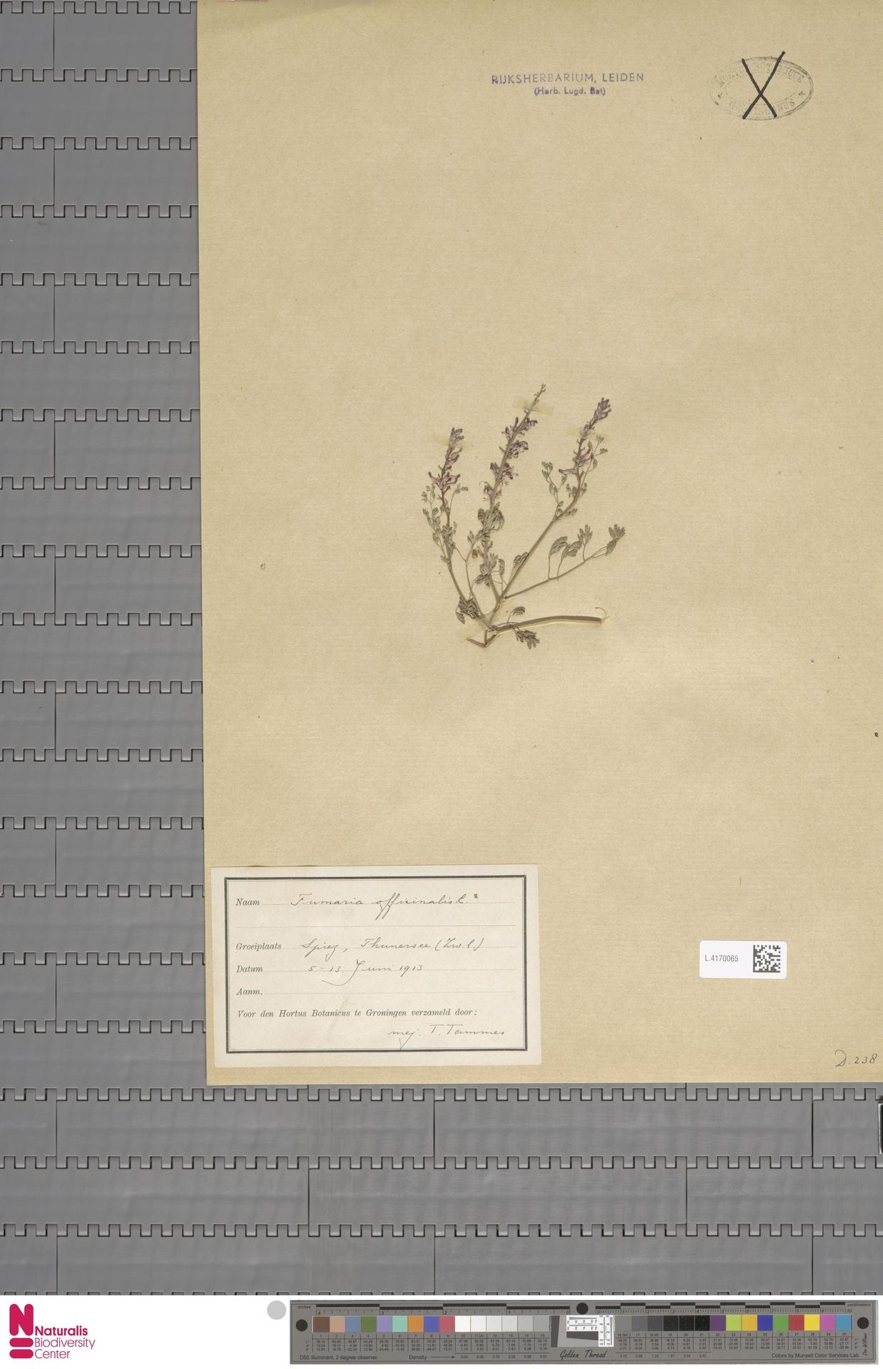 L.4170065 | Fumaria officinalis L.