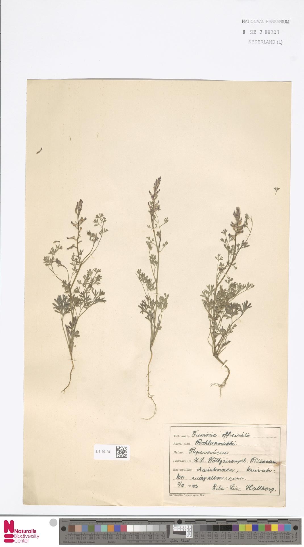 L.4170128   Fumaria officinalis L.