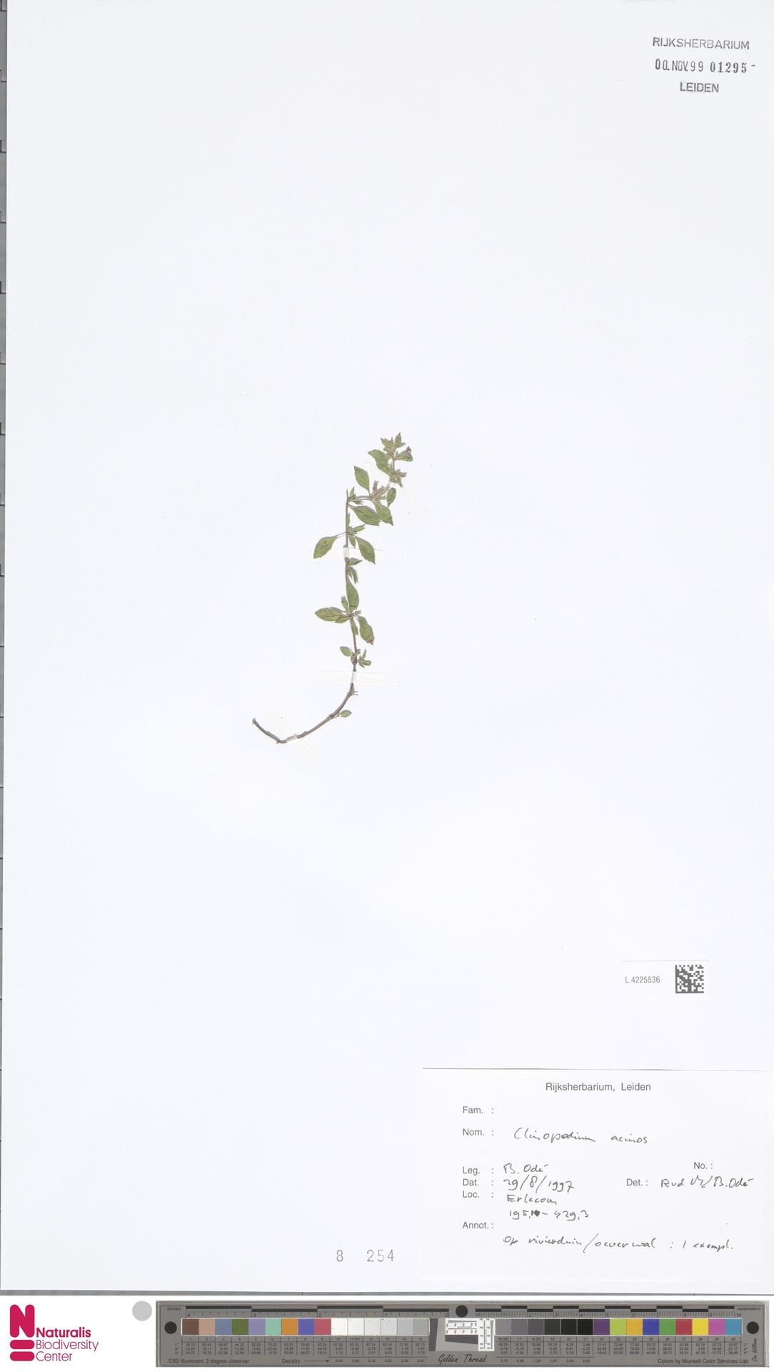 L.4225536 | Clinopodium acinos (L.) Kuntze