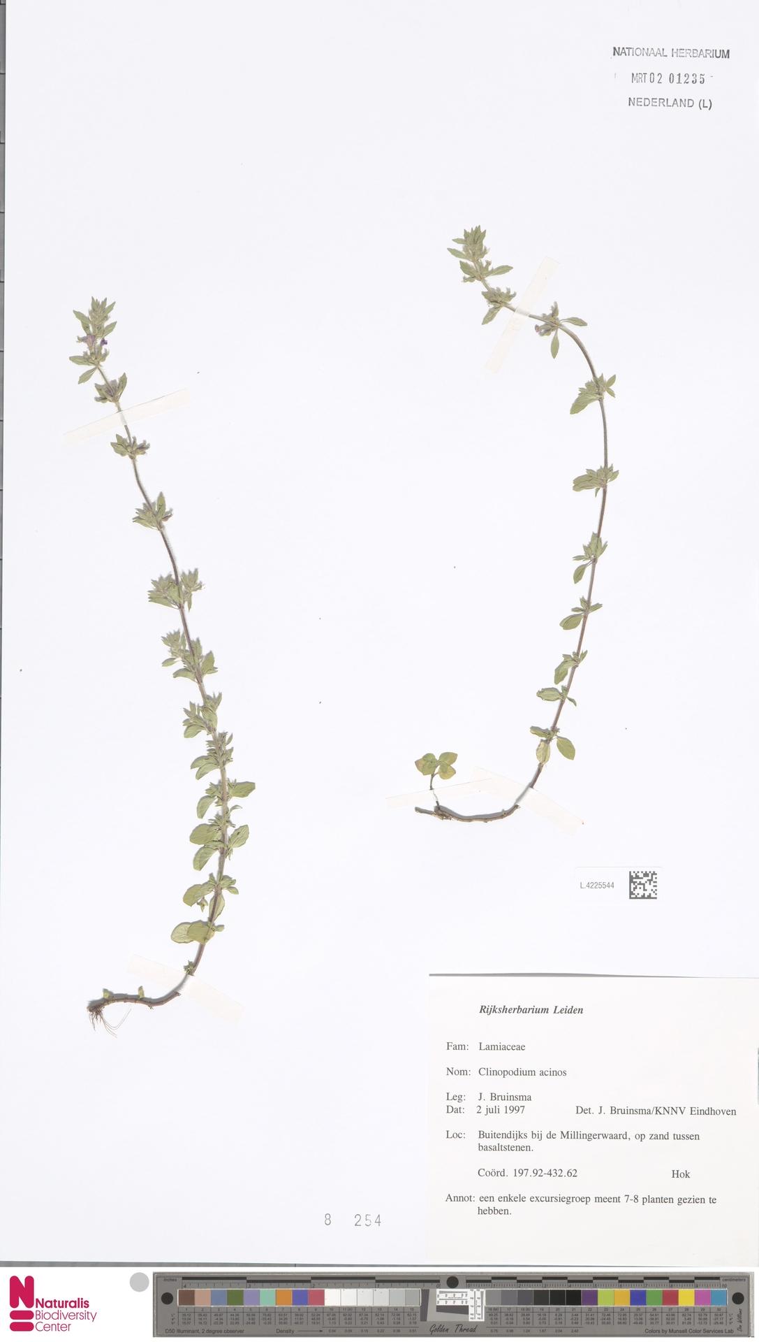 L.4225544 | Clinopodium acinos (L.) Kuntze