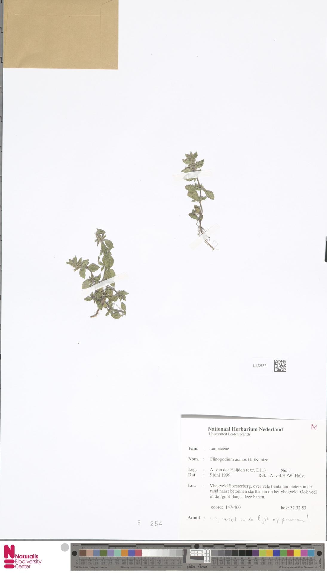 L.4225671 | Clinopodium acinos (L.) Kuntze