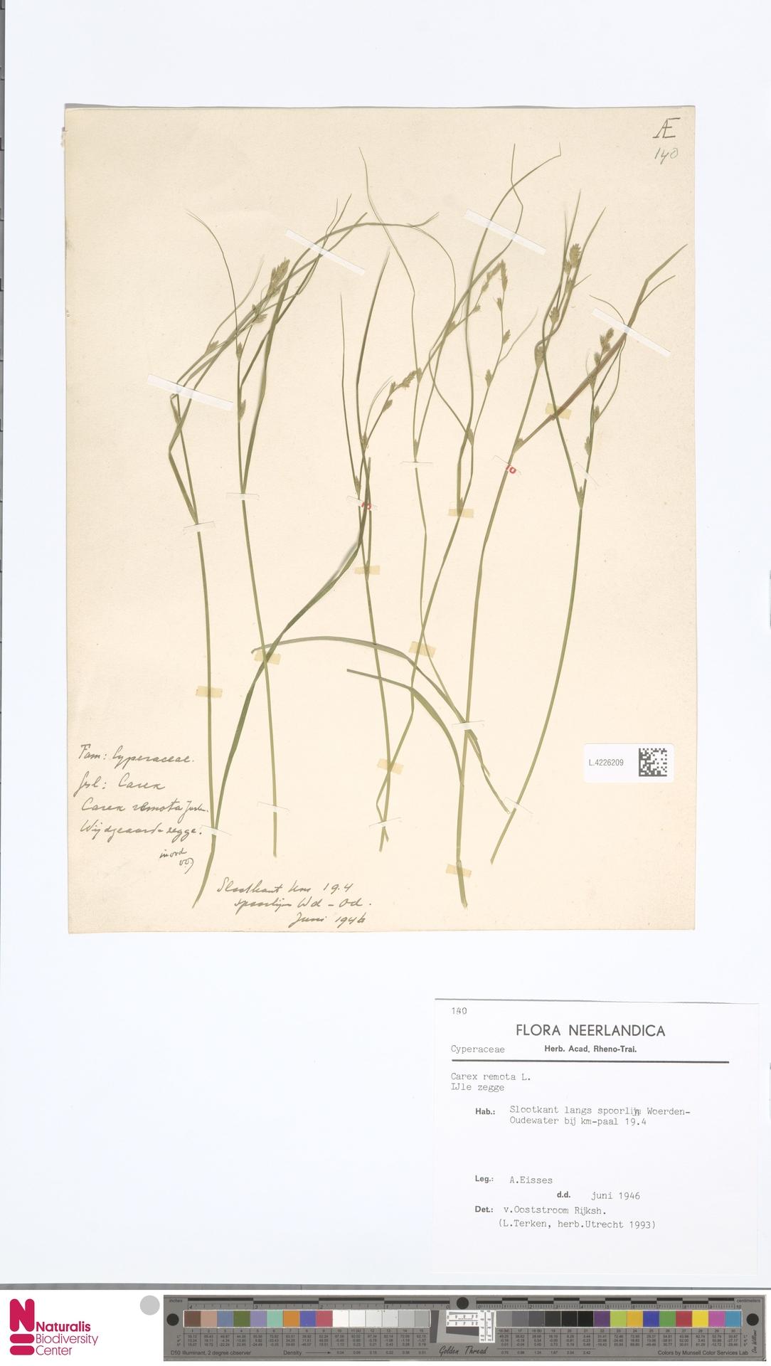 L.4226209 | Carex remota L.