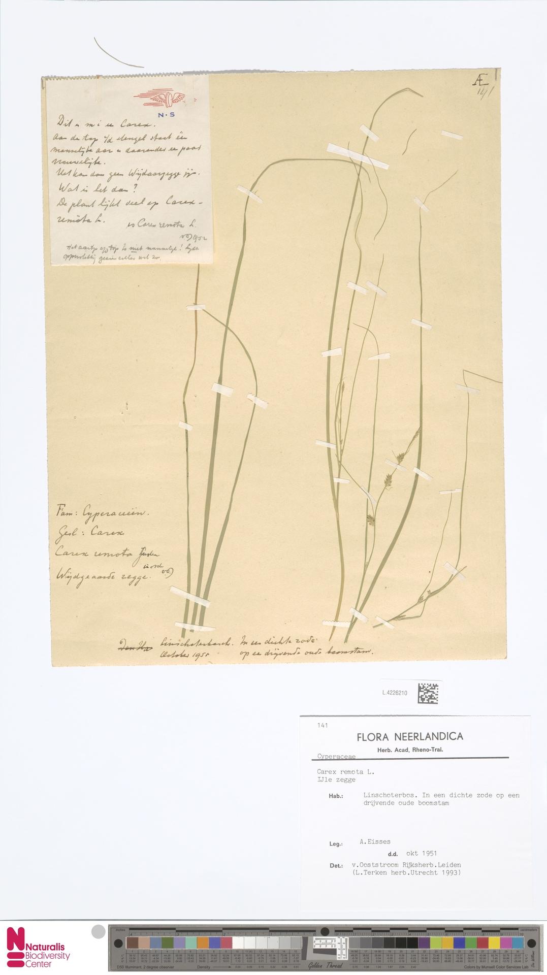 L.4226210 | Carex remota L.