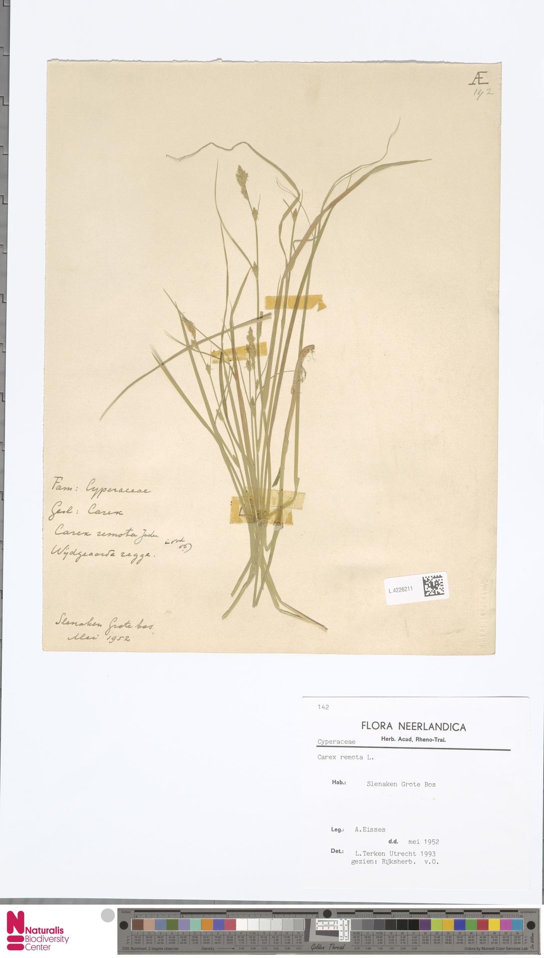 L.4226211 | Carex remota L.