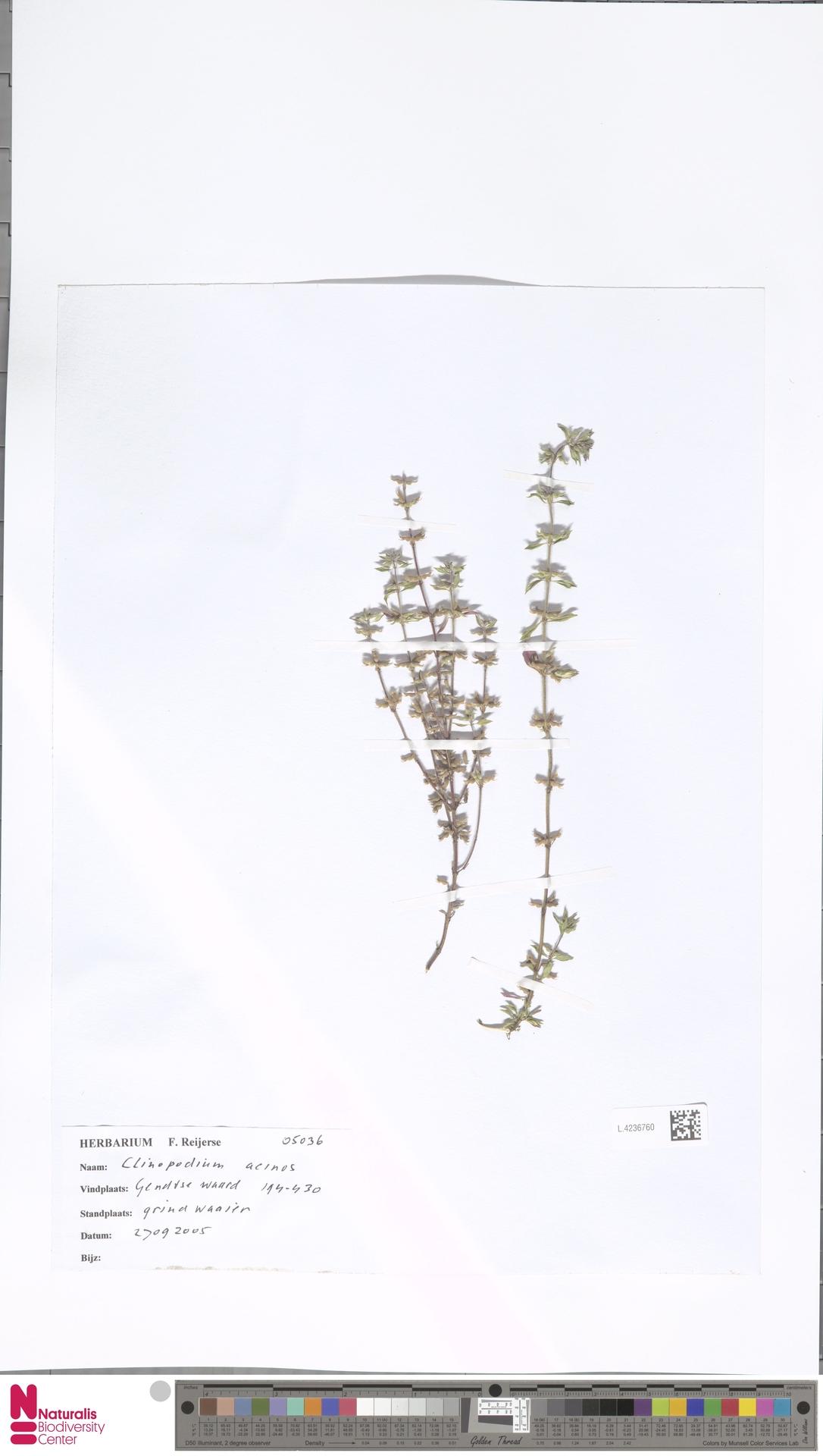 L.4236760 | Clinopodium acinos (L.) Kuntze