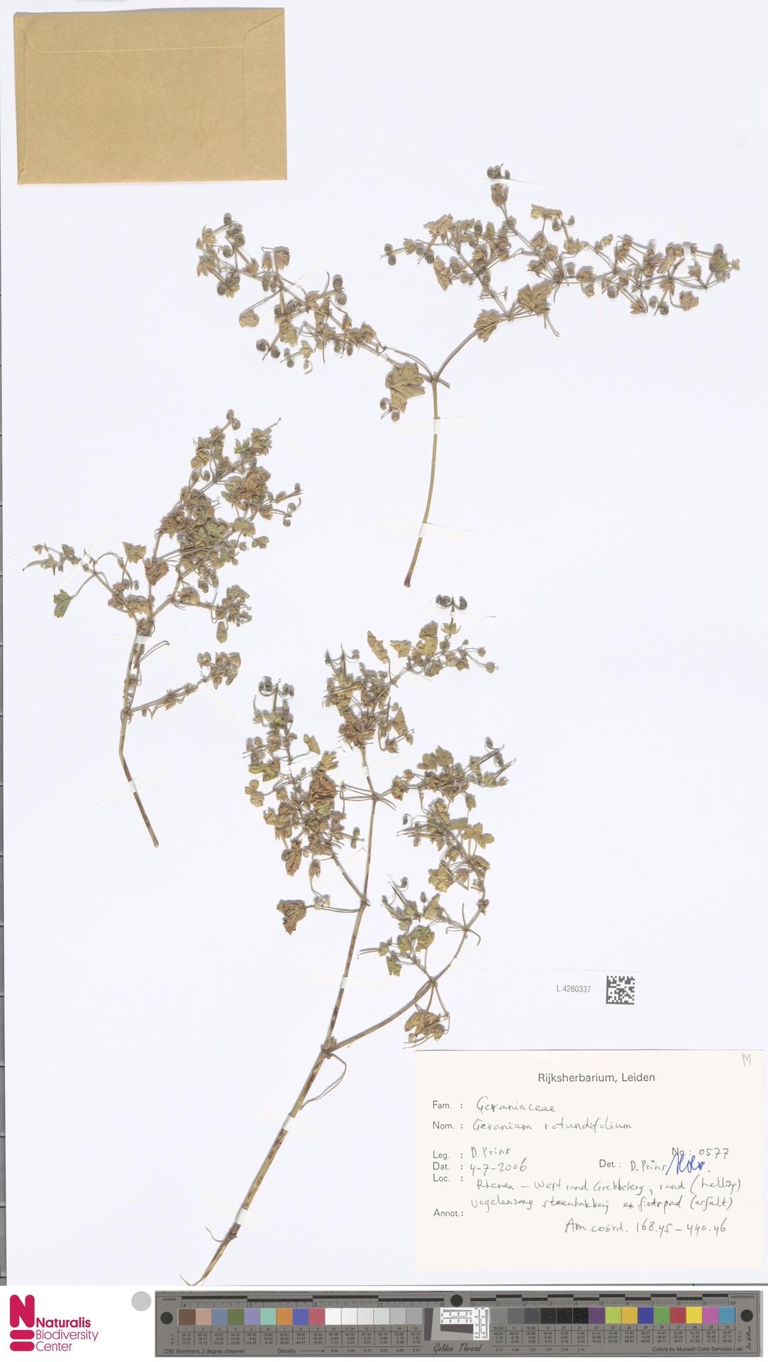 L.4260337 | Geranium rotundifolium L.