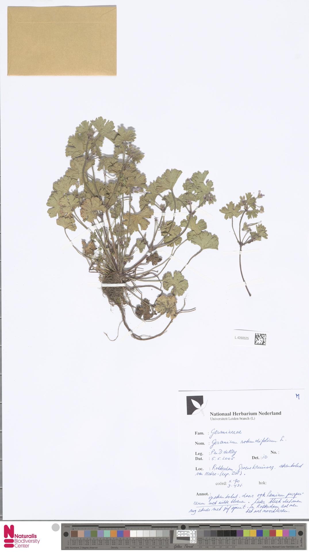 L.4260525 | Geranium rotundifolium L.