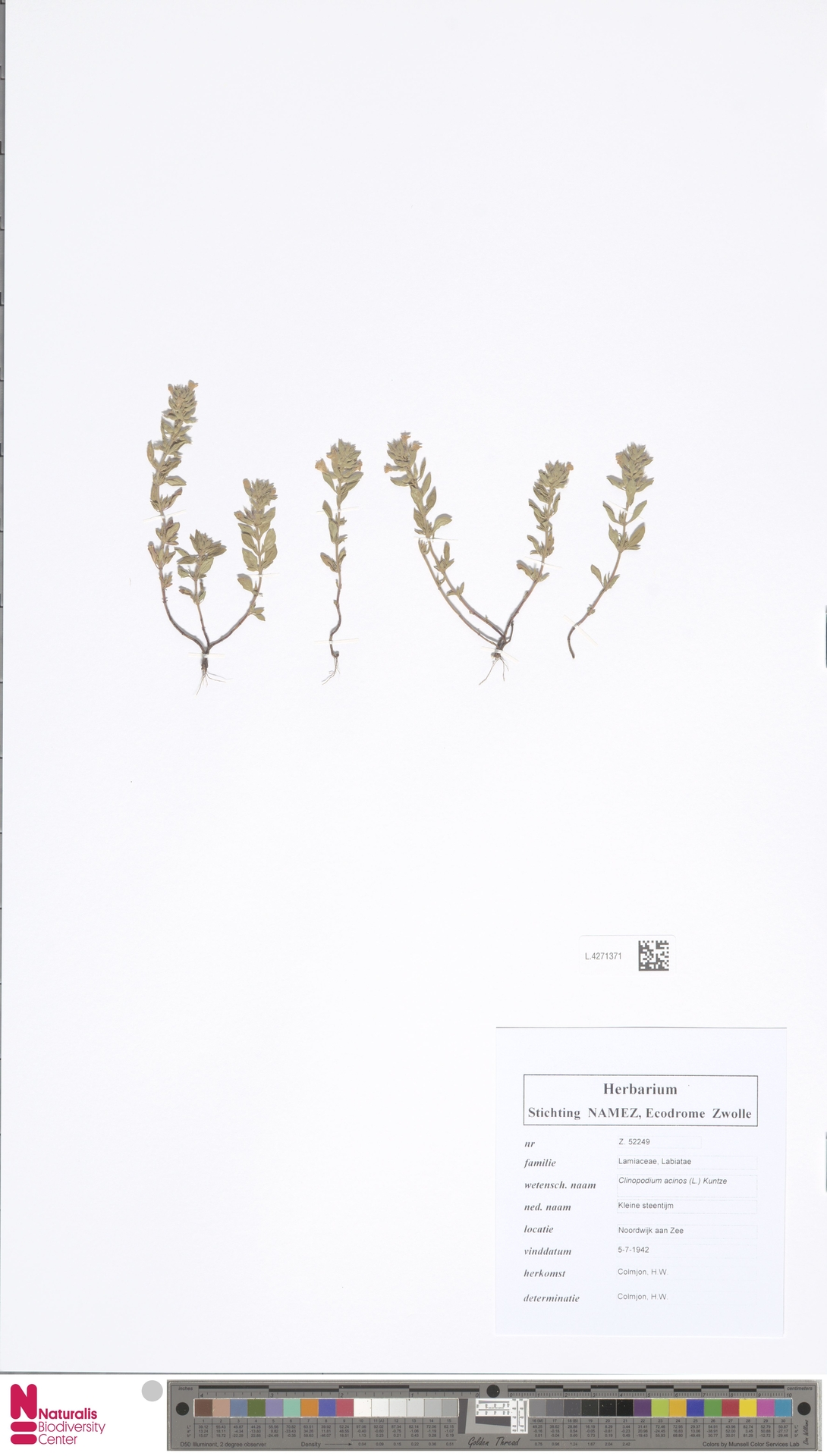 L.4271371 | Clinopodium acinos (L.) Kuntze