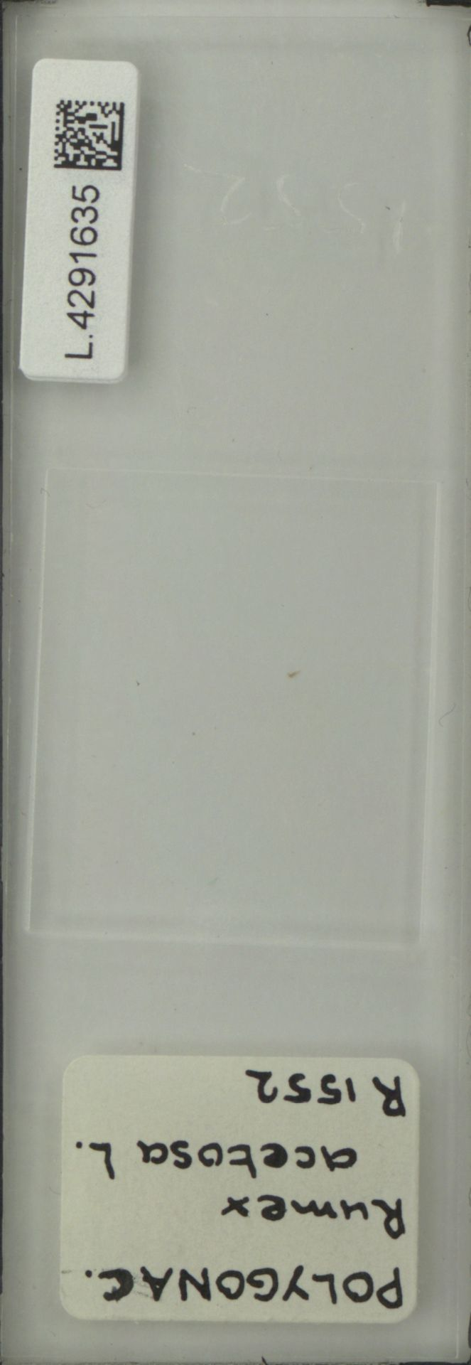 L.4291635 | Rumex acetosa L.