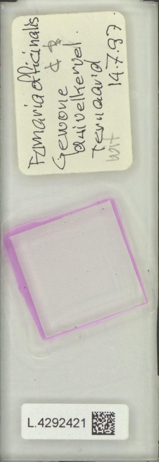 L.4292421 | Fumaria officinalis L.