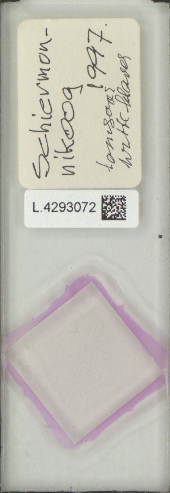 L.4293072 | Limonium vulgare Mill.