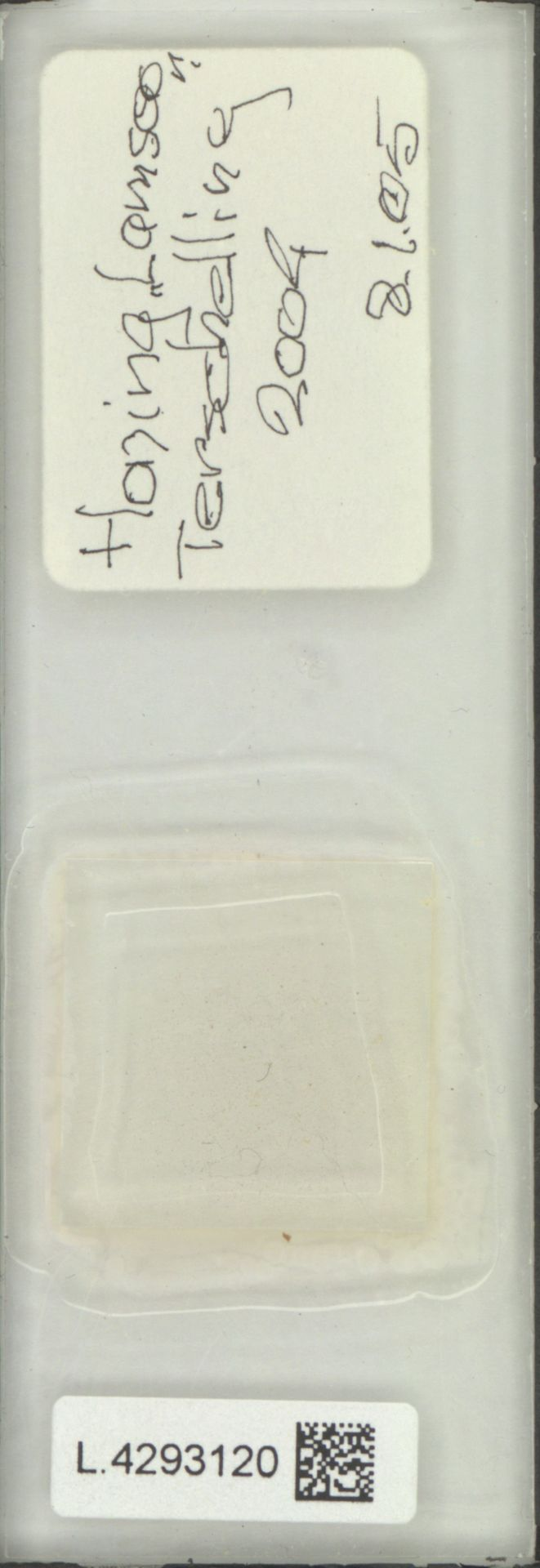 L.4293120   Limonium vulgare Mill.