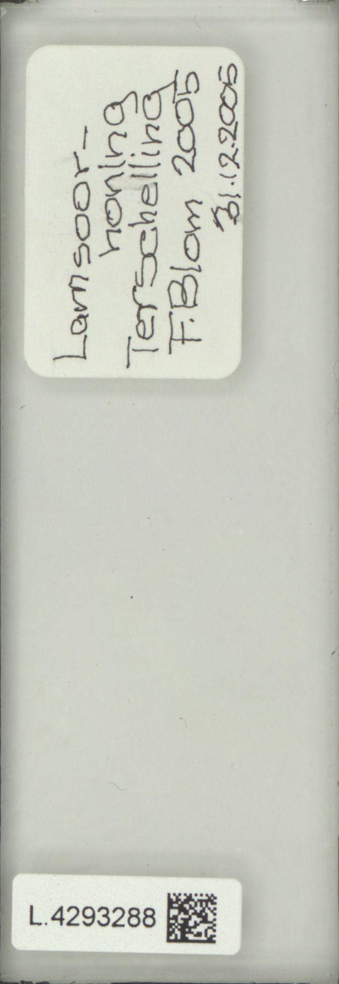 L.4293288 | Limonium vulgare Mill.