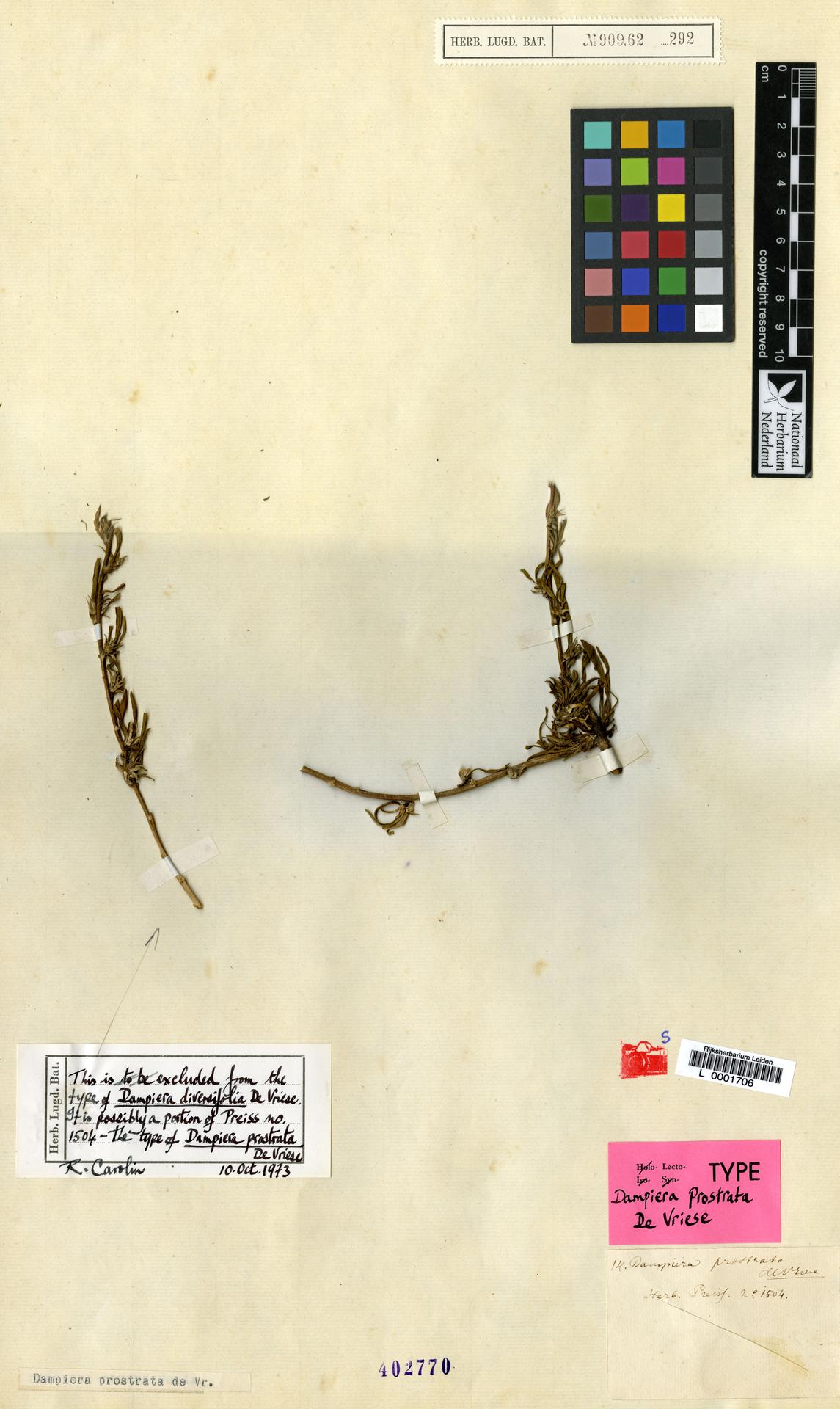 L  0001706 | Dampiera prostrata de Vriese