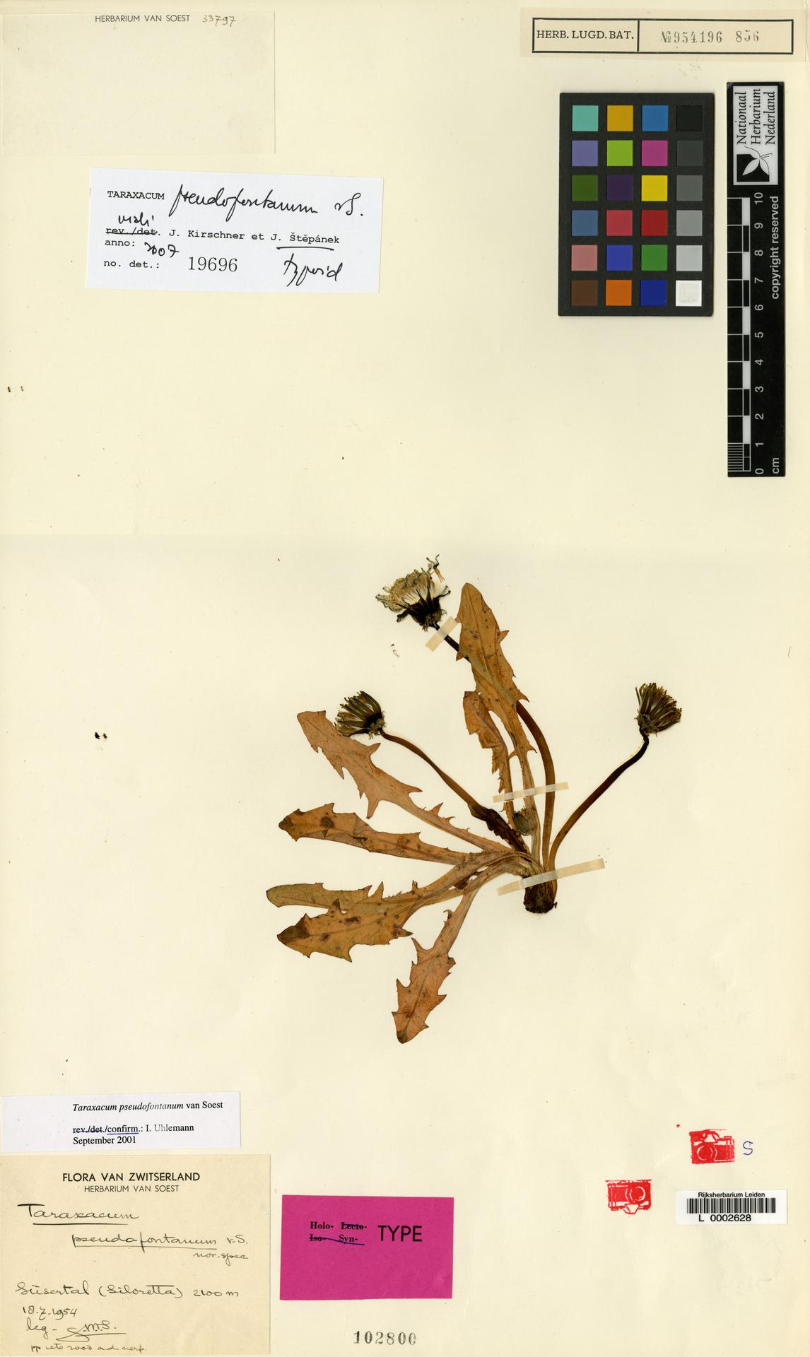 L  0002628 | Taraxacum pseudofontanum Soest