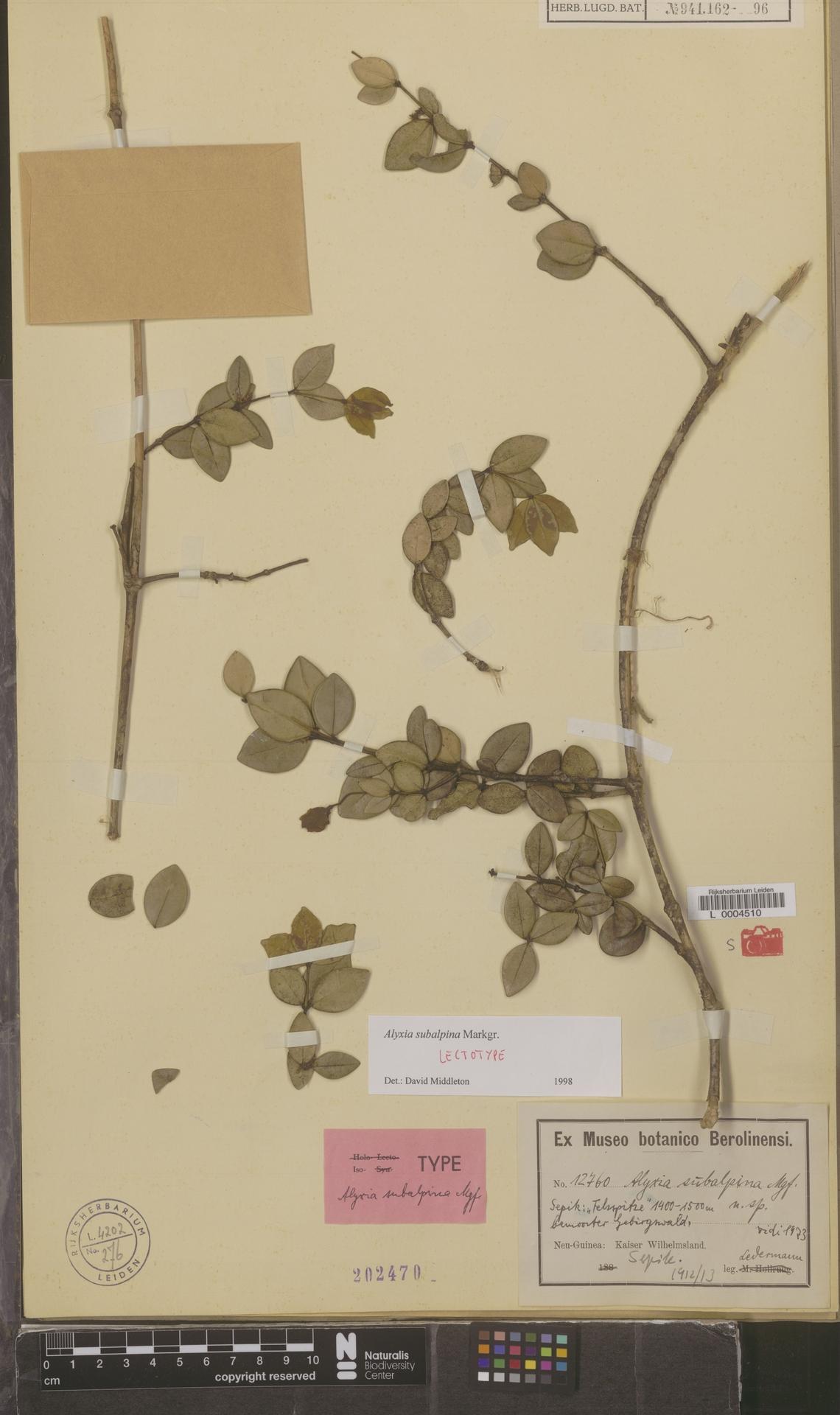 L  0004510 | Alyxia subalpina Markgr.