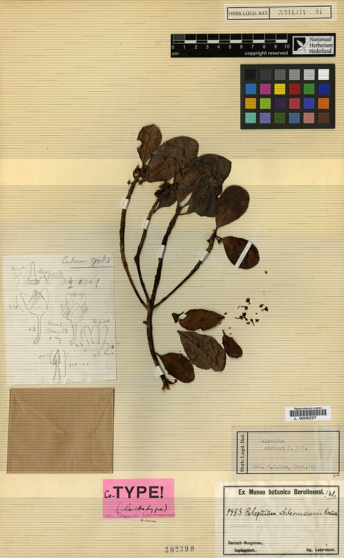 L  0006297 | Palaquium ridleyi King & Gamble