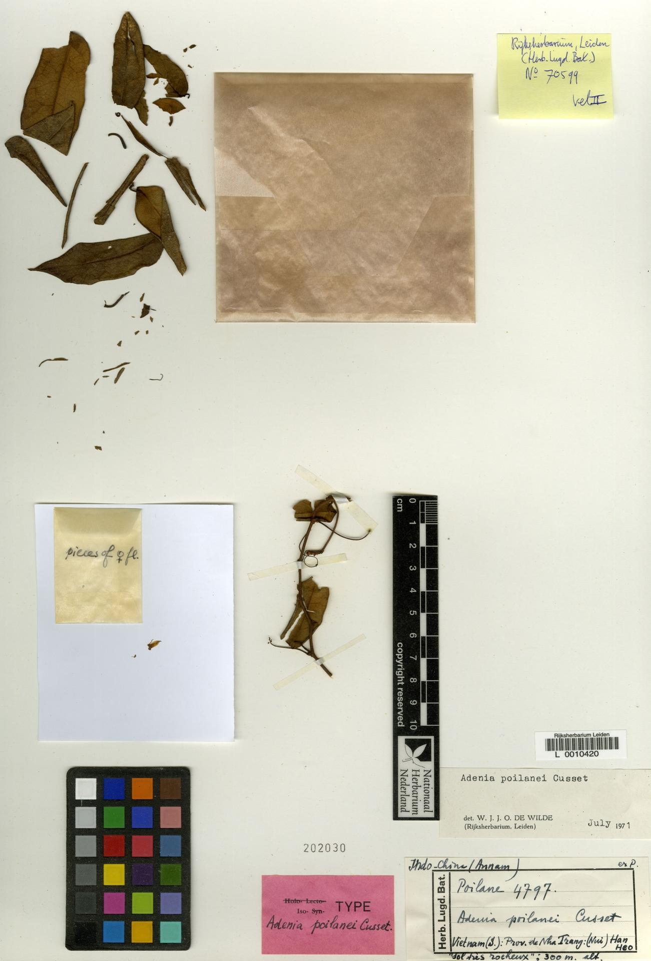 L  0010420 | Adenia poilanei C.Cusset