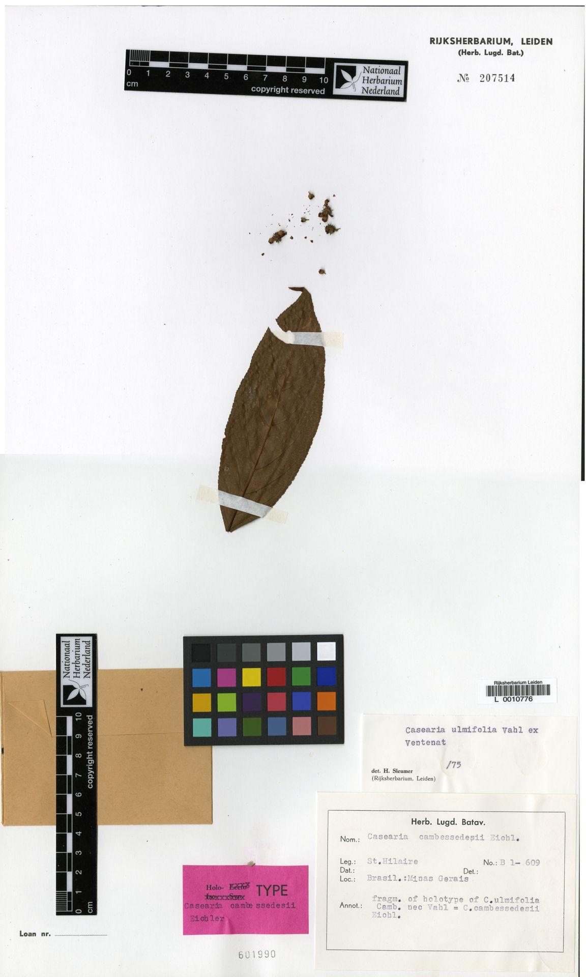 L  0010776 | Casearia ulmifolia Vahl ex Vent.