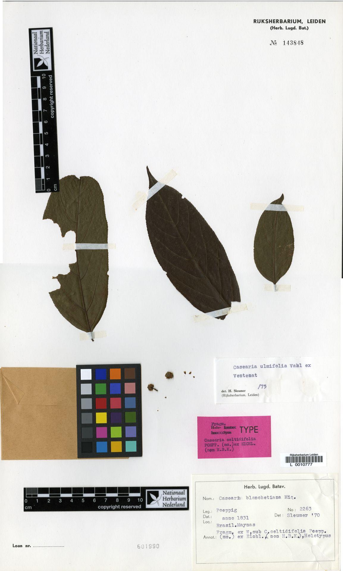 L  0010777 | Casearia ulmifolia Vahl ex Vent.