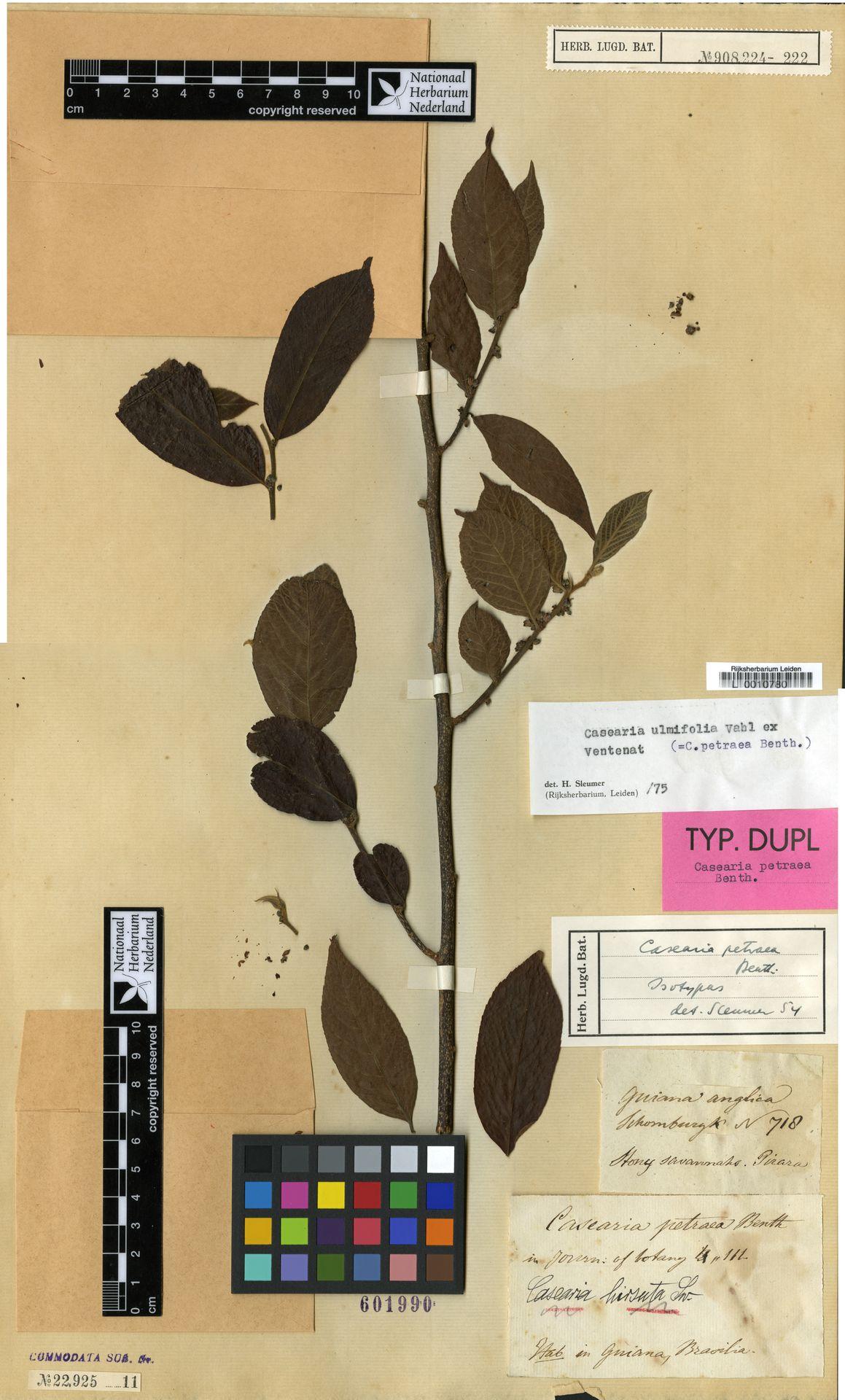 L  0010780 | Casearia ulmifolia Vahl ex Vent.