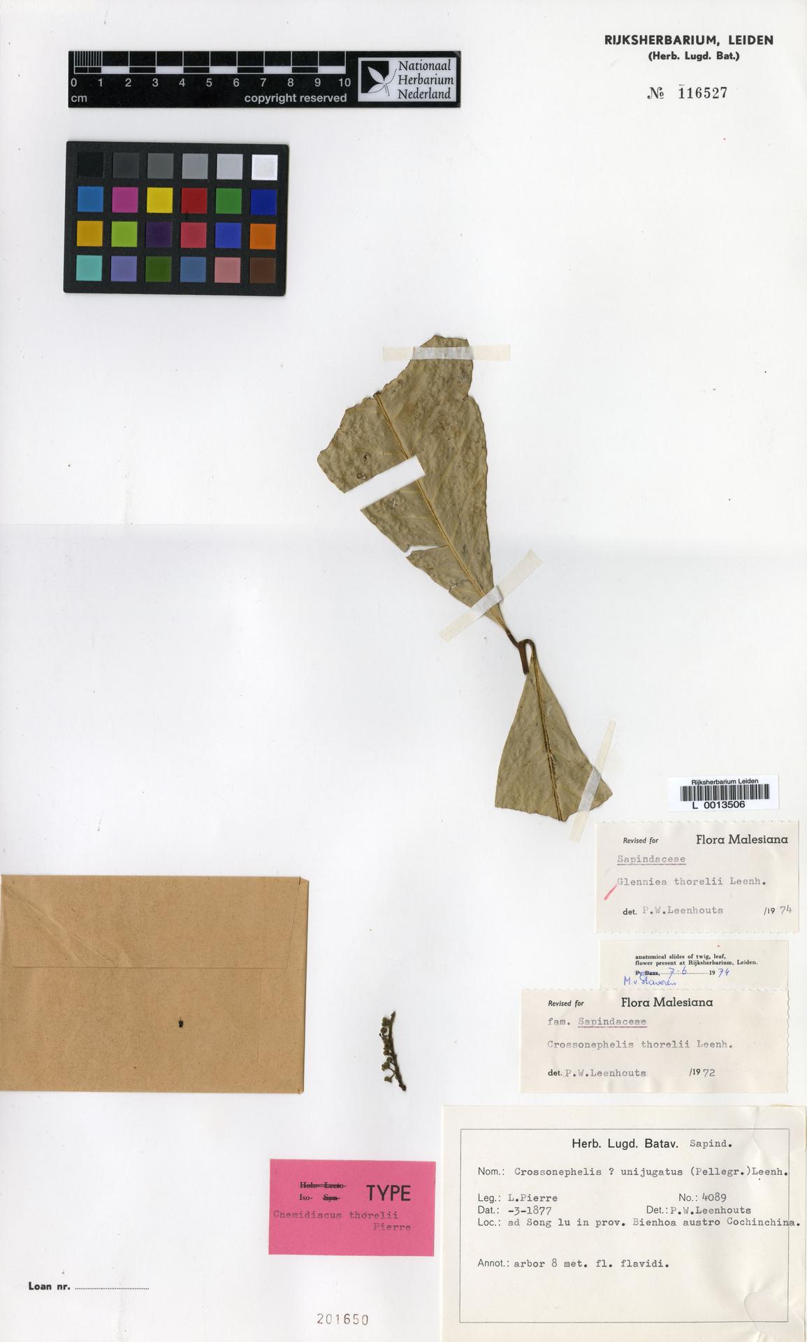 L  0013506 | Glenniea thorelii (Pierre) Leenh.