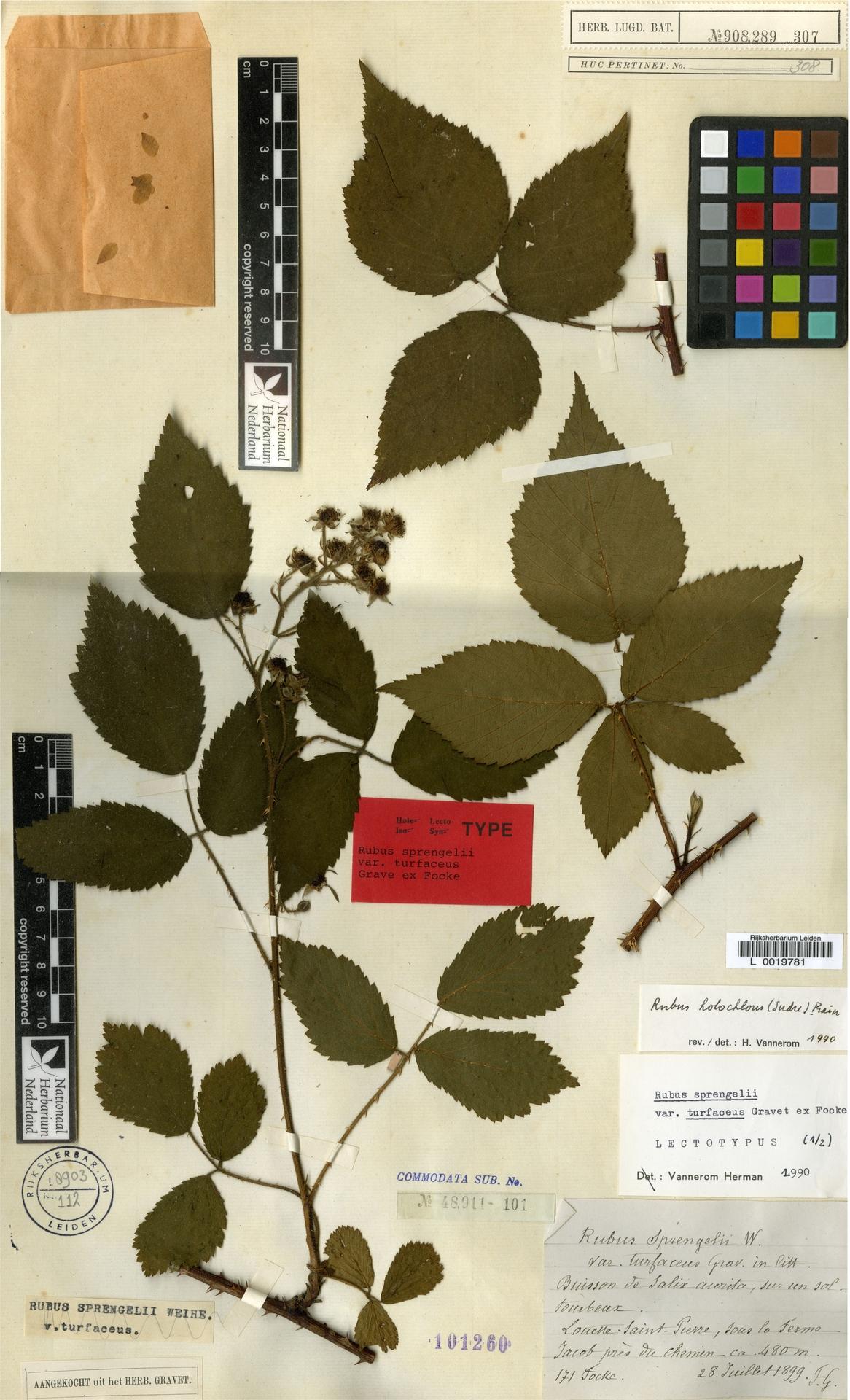 L  0019781 | Rubus holochlous (Sudre) Prain