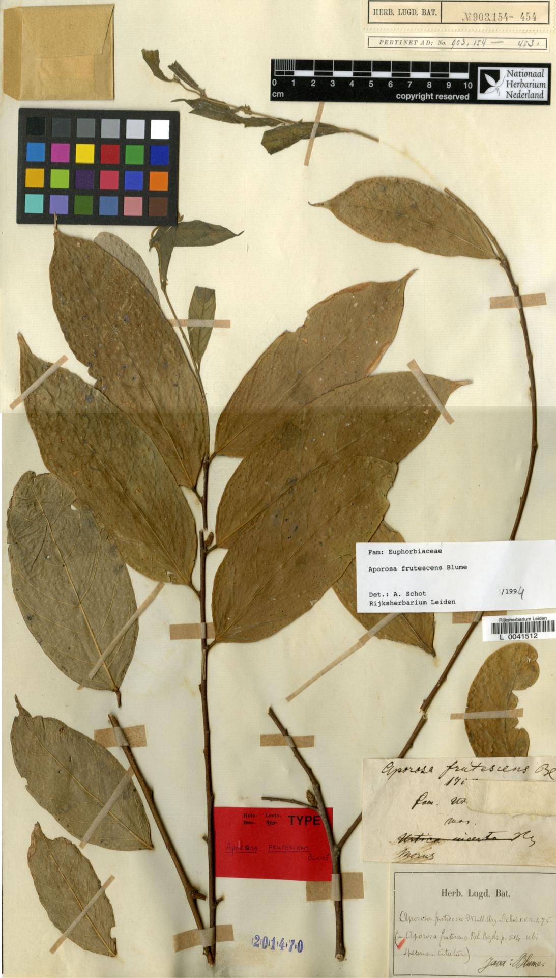 L  0041512   Aporosa frutescens Blume