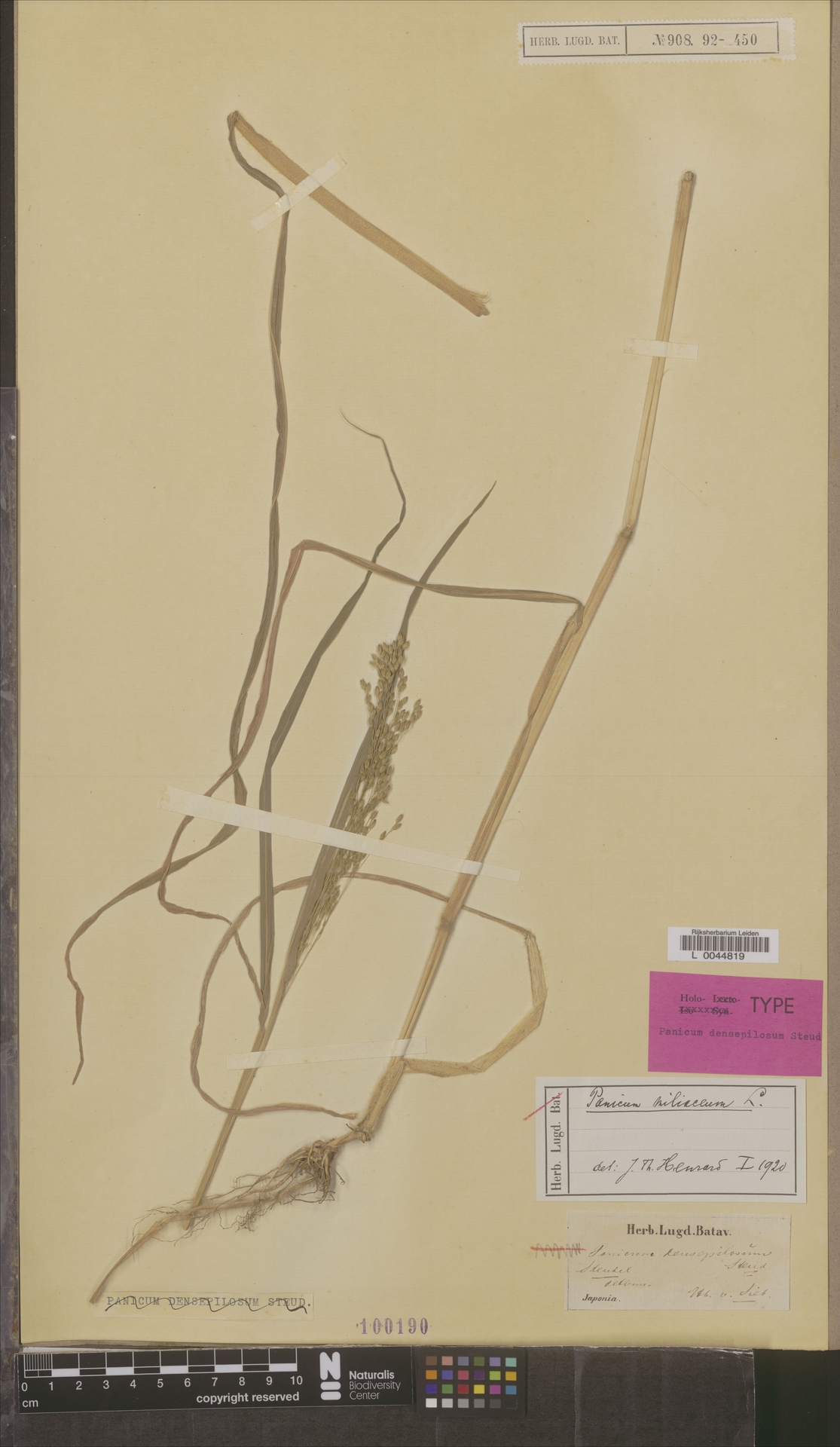 L  0044819 | Panicum miliaceum L.