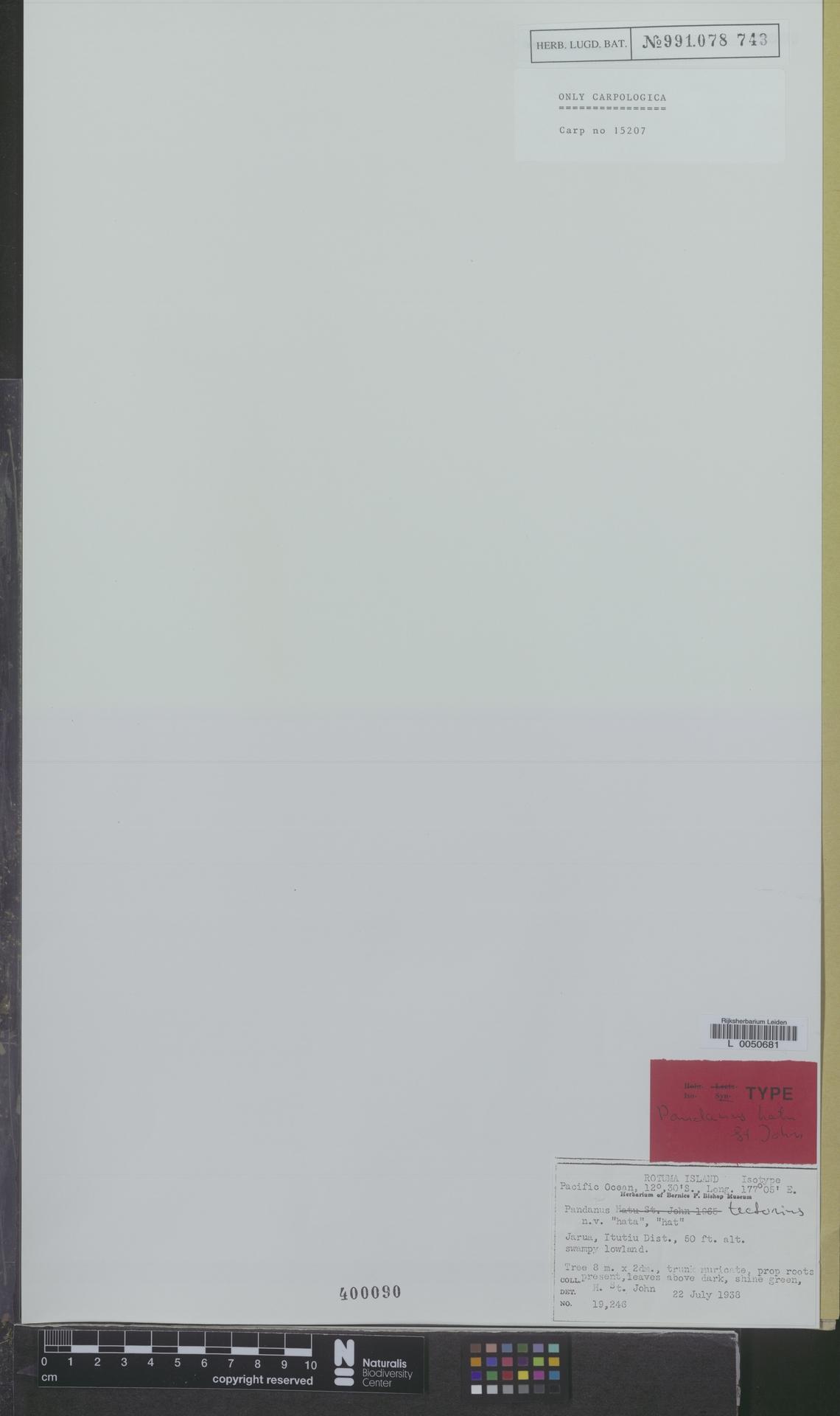 L  0050681 | Pandanus tectorius Parkinson