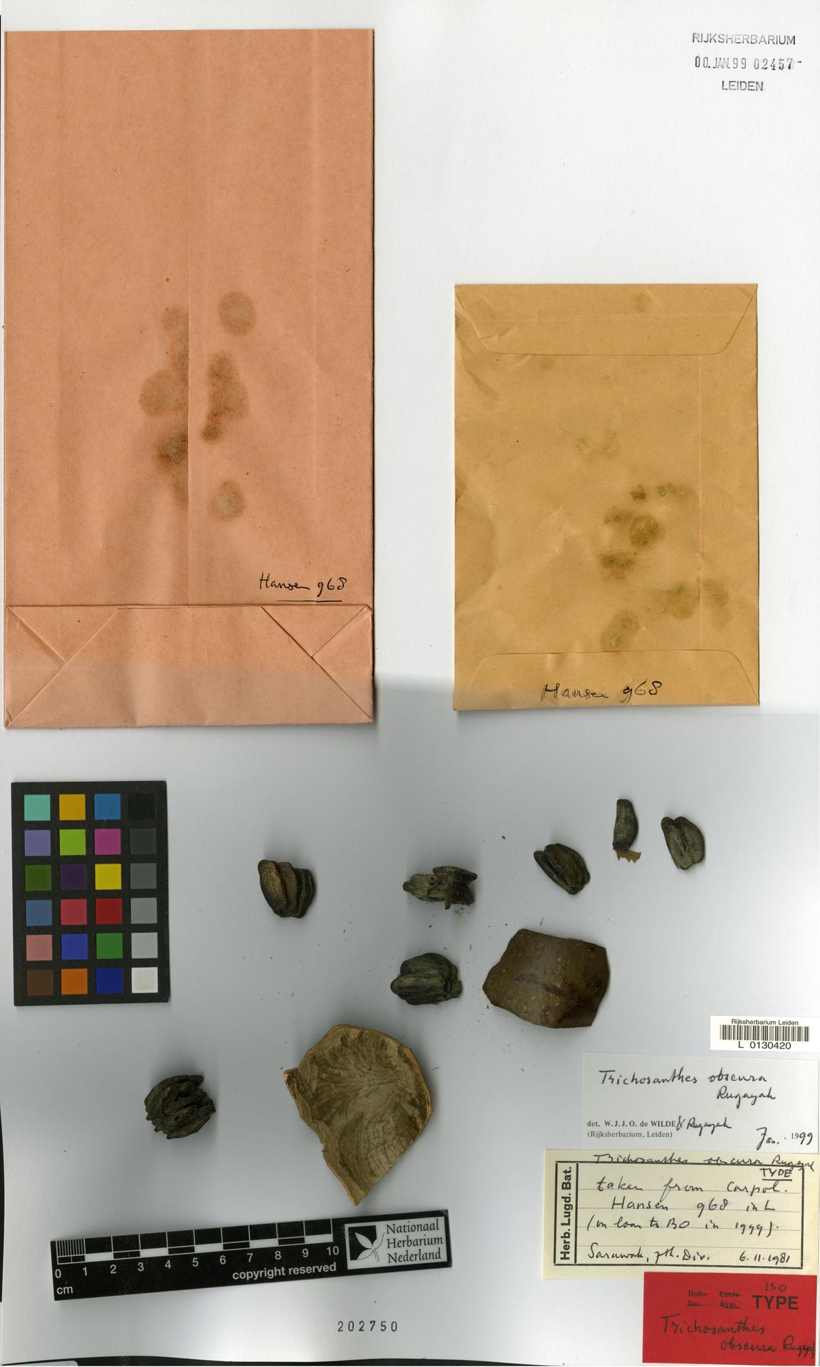 L  0130420 | Trichosanthes obscura Rugayah