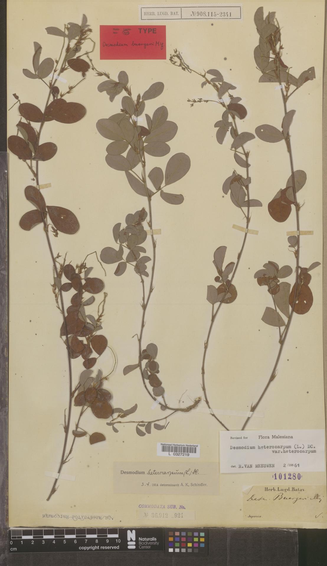 L  0327219 | Desmodium heterocarpon subsp. heterocarpon