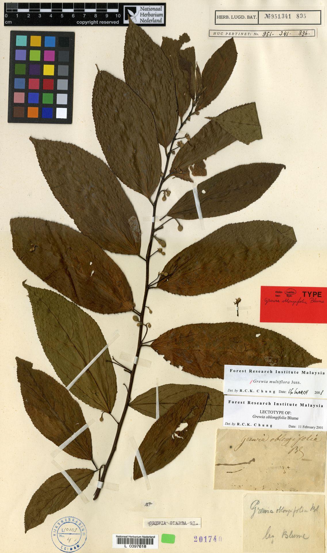 L  0397618 | Grewia multiflora Juss.