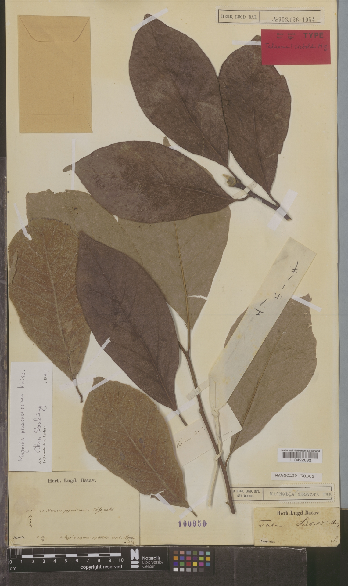 L  0422632 | Magnolia praecocissima Koidz.