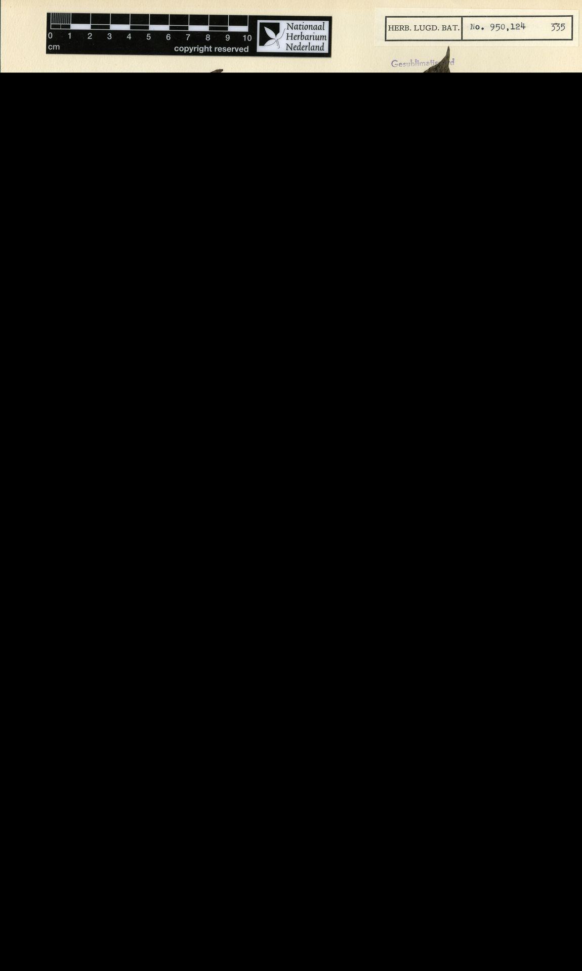 L  0537714   Gaertnera sralensis (Pierre ex Pit.) Kerr