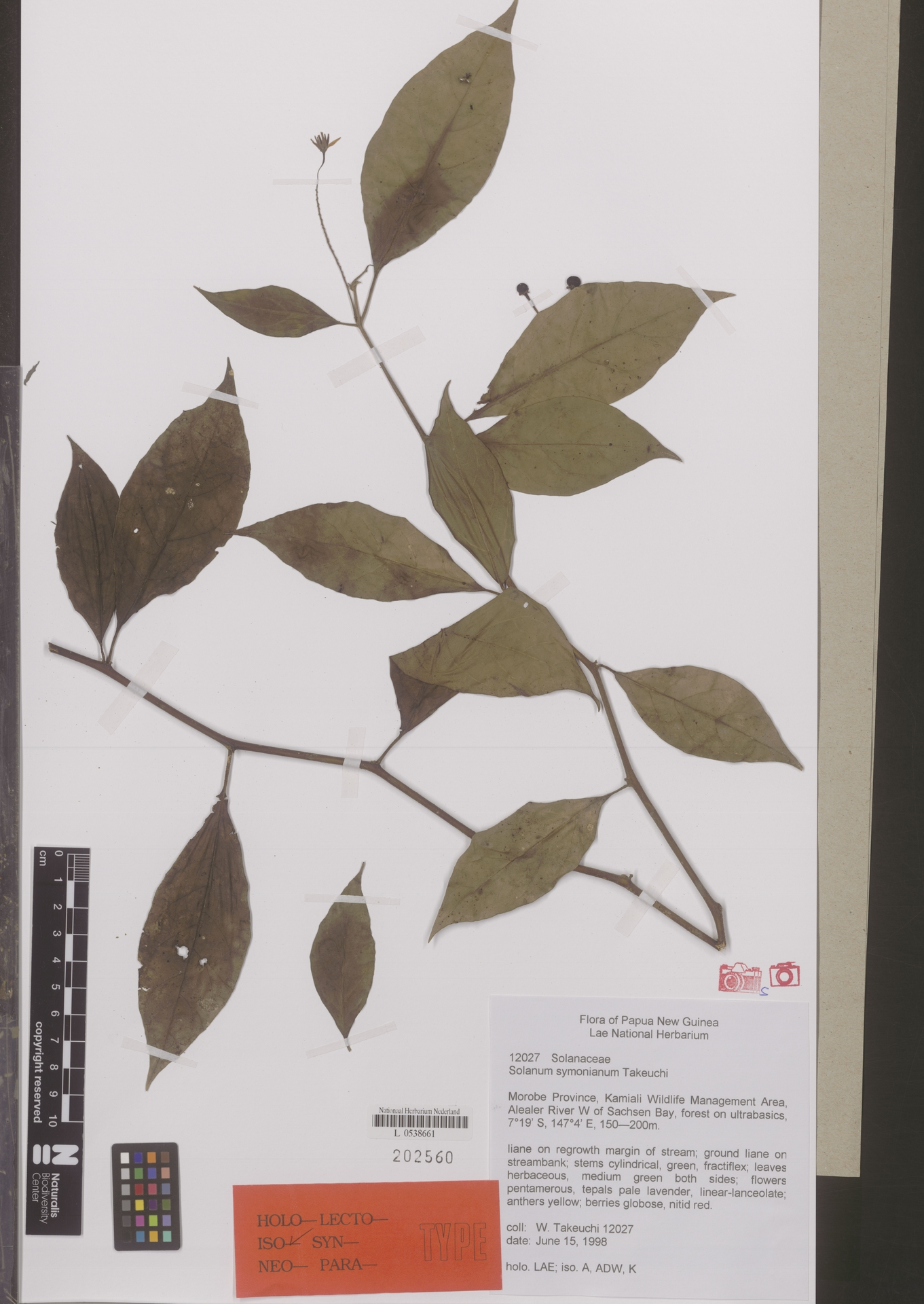 L  0538661 | Solanum symonianum W.N.Takeuchi