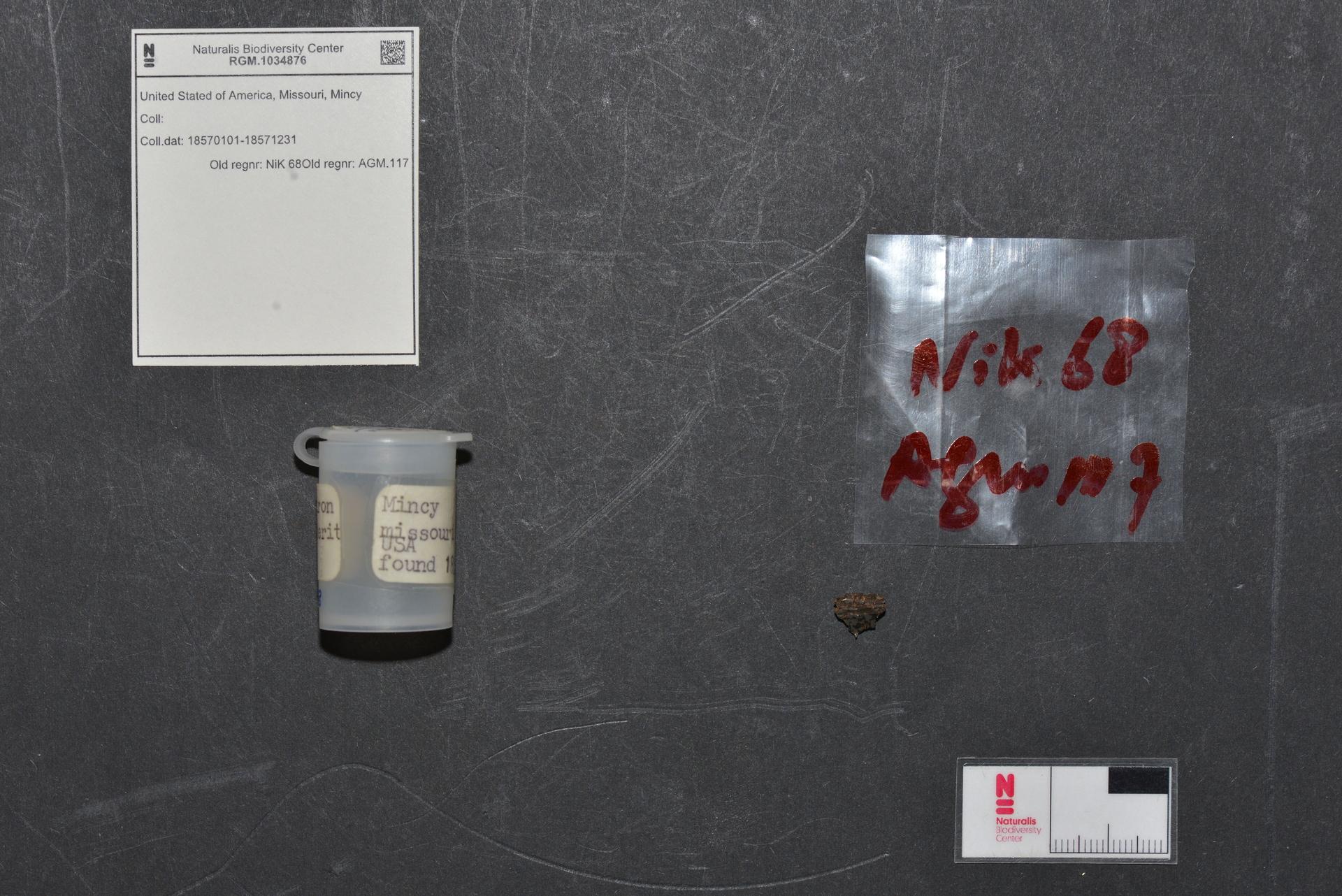 RGM.1034876 | Mesosiderite-B4