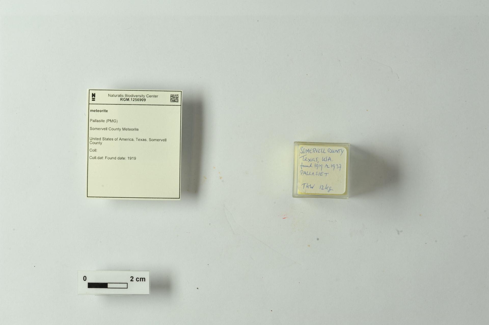 RGM.1256909 | Pallasite (PMG)