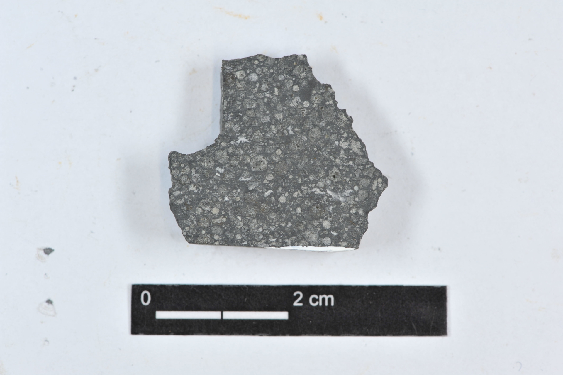 RGM.1340893 | Pallasite, PMG