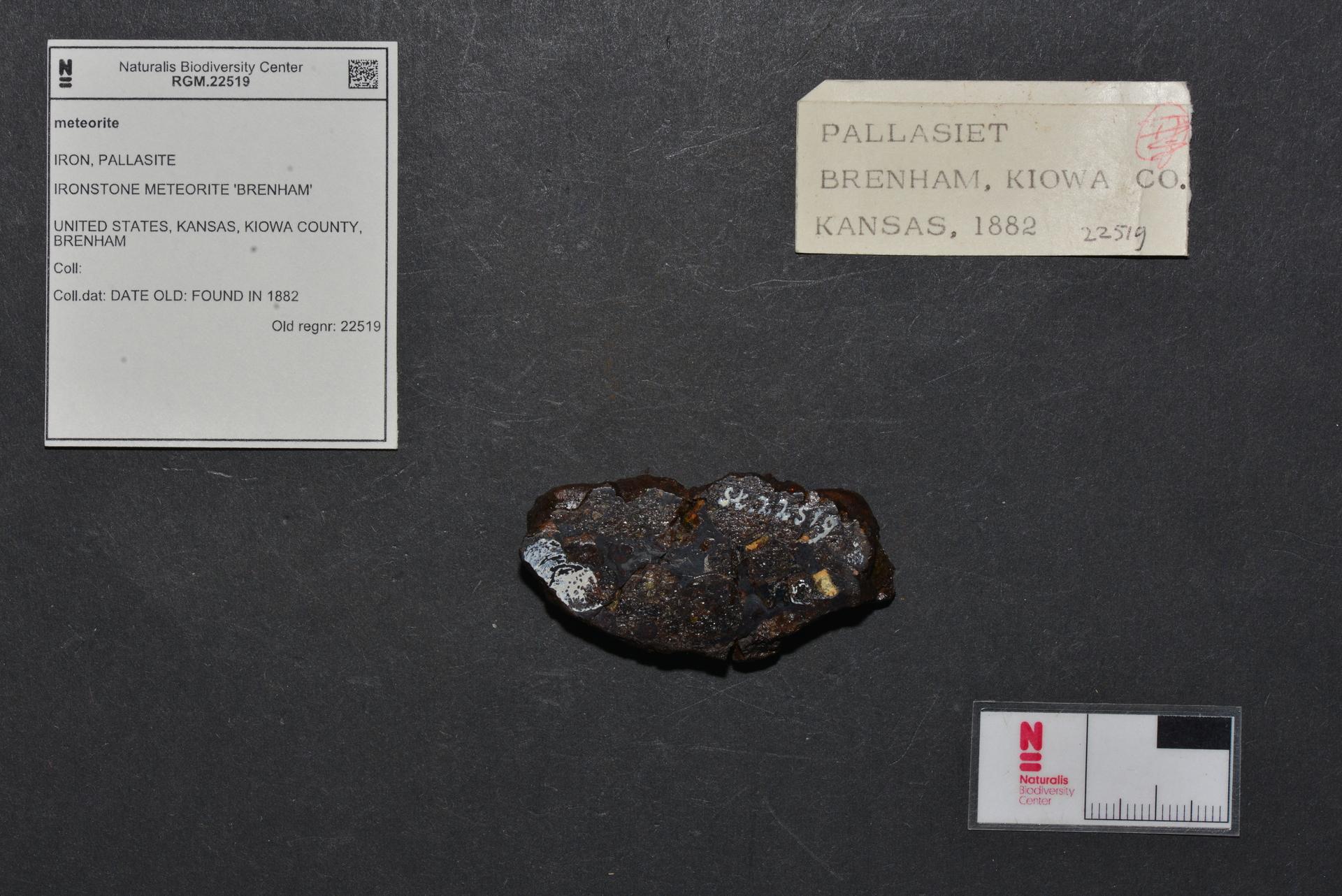 RGM.22519 | Pallasite, PMG-an