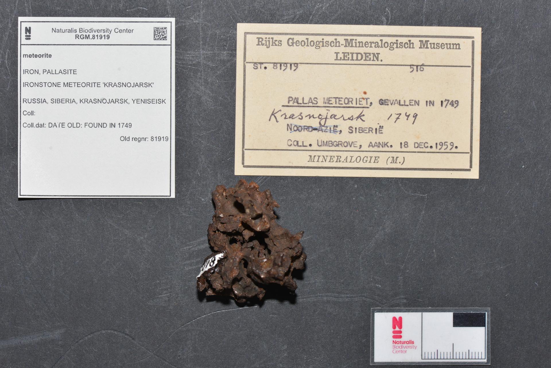 RGM.81919   Pallasite, PMG-an