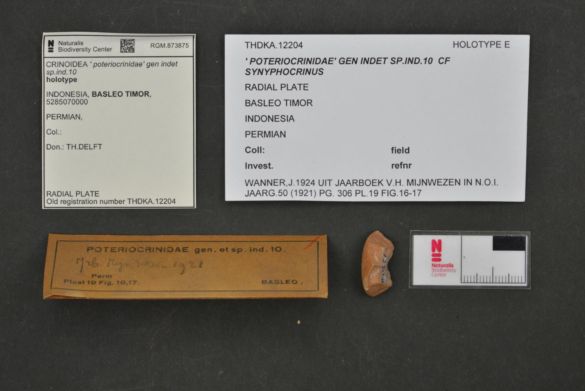 RGM.873875   ' poteriocrinidae' gen indet sp.ind.10