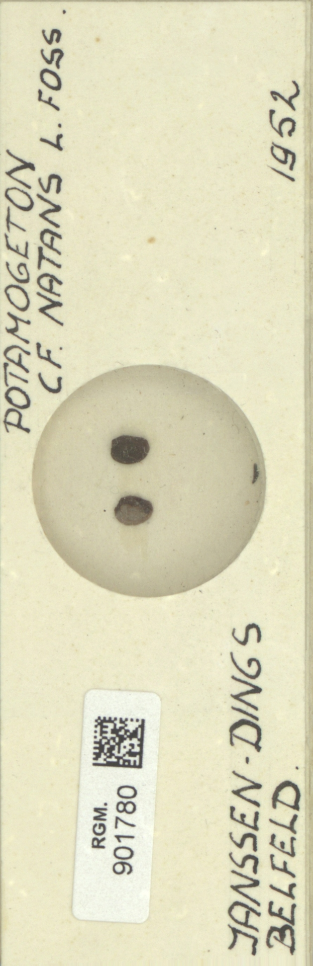 RGM.901780 | Potamogeton natans L.