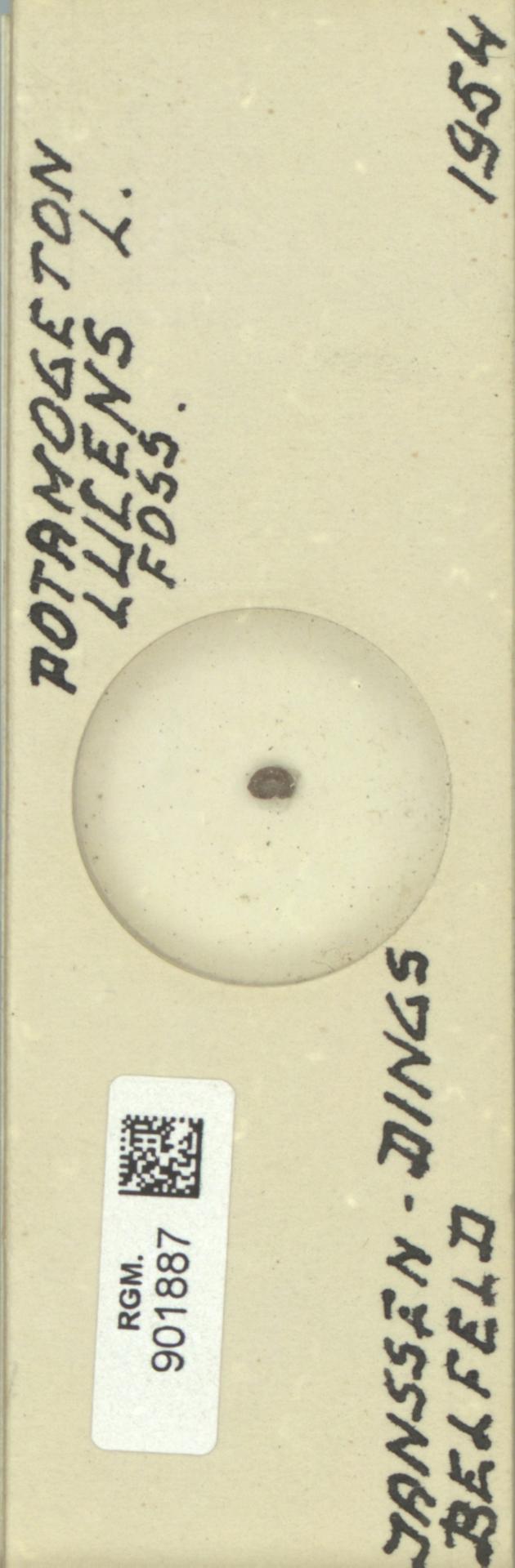 RGM.901887 | Potamogeton lucens L.