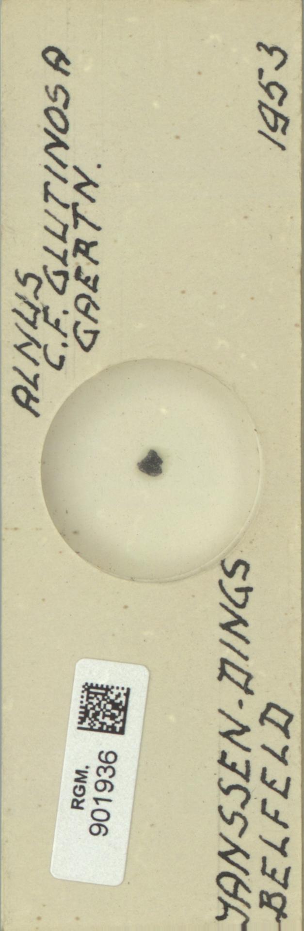 RGM.901936 | Alnus glutinosa Gaertn.