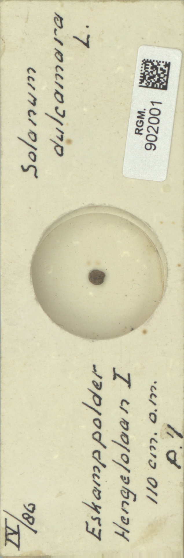 RGM.902001 | Solanum dulcamara L.
